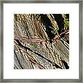 Wired Fence Post Framed Print