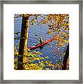 Woman Kayaking With Fall Foliage Framed Print