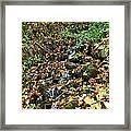 Wooded Creek Framed Print
