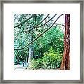 Woodland And Huge Tree Illustration Framed Print