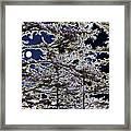 Woodland Solitude Framed Print