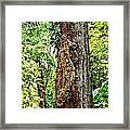 Woodpecker Tree Framed Print