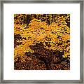 Woods Of Yellow Framed Print