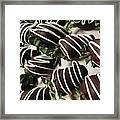 Wrapped In Chocolate Framed Print