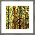 Yellow Bamboo Framed Print