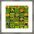 Yellow Blossoms Framed Print by Fine Art  Photography