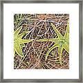 Yellow Butterwort In Habitat Framed Print by Scott Bennett