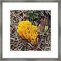 Yellow Coral Mushroom Framed Print
