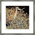 Yellow Crowned Night Heron Framed Print
