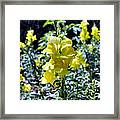 Yellow Dragons Framed Print