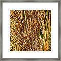 Yellow Feather Reed Grass Framed Print