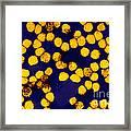 Yellow Fever Virus, Tem Framed Print