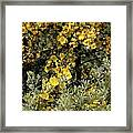 Yellow Flowers On Tree Framed Print