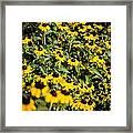 Yellow Golden Flowers 3 Framed Print