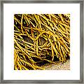 Yellow Kelp Framed Print
