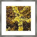 Yellow Strand Framed Print
