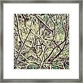 Yet To Spring Framed Print