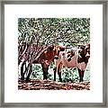 Young Bulls Framed Print
