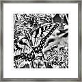 Zebra Wings Framed Print