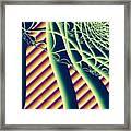 Fabaceae Framed Print