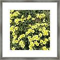 A Cluster Of Sunshine Framed Print