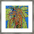 Amaranthus Sold Framed Print