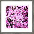 Azalea Flowers Framed Print