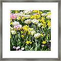 Beautiful Spring Flowers Framed Print