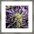 Cannabis Macro Framed Print