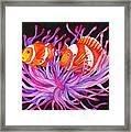 Clownfish And Sea Anenome  Framed Print