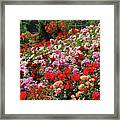 Colorful Spring Rose Garden Framed Print