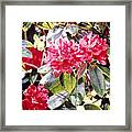 Dreaming Of April Framed Print by David Lloyd Glover