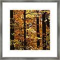 Fall Forest Framed Print