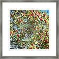 Firethorn Tree Framed Print