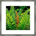 Fern Fractals In Nature Framed Print