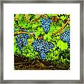 Lucious Grapes Framed Print