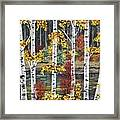 Manitoba Birch  Framed Print by Lynn Huttinga