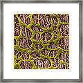 Myenteric Plexus, Sem Framed Print