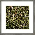 Nature Detail Framed Print