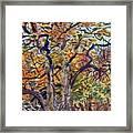 October Colors Framed Print