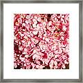 Prettiest Pink Framed Print