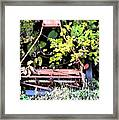 Push Mower Framed Print