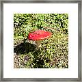 Red And White Potted Toadstool Framed Print