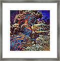 Red Sea Turtle Framed Print
