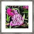 Sounds Of Summer  Framed Print