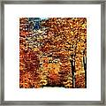 The Richness Of Autumn Treasures Framed Print