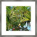 Tropical Plants Framed Print
