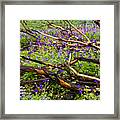Under The Charred Laurel Sumac Framed Print