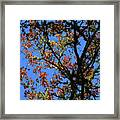 10-15-16--0777 Blue Sky # 3 Don't Drop The Crystal Ball Framed Print