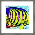 Underwater. Fish. Framed Print
